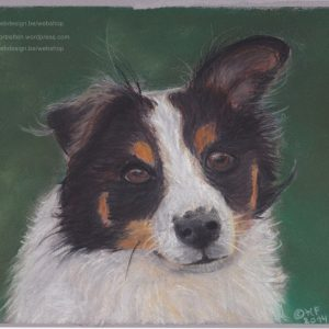 Border collie in pastel